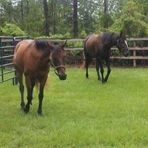 The Horse Stamp Inn is nestled on 16 sprawling acres of the Georgia coast, with expansive pastures, rustic horse barn.
