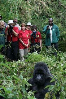 Ged doesn't just donate a check at the end of each year. He takes all of his travelers right to the organization to which they are contributing. In Rwanda, his tours visit the Gorilla Doctors, a non-profit group of veterinarians responsible for keeping the highly endangered Mountain Gorilla population healthy