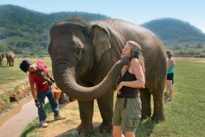On the Adventures Cross-Country teen adventure to Thailand, students work alongside the mahout, a traditional elephant caretaker, bathing, feeding and riding elephants deep into the jungle while embarking on a journey to protect and care for these animals in their native land.