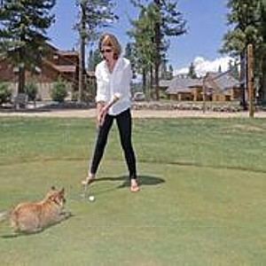 Playing golf with a canine companion at Chalet View Lodge.